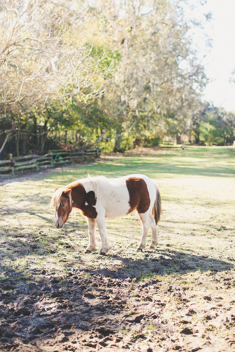 Magnolia Plantation and Gardens Wedding in Charleston, South Carolina